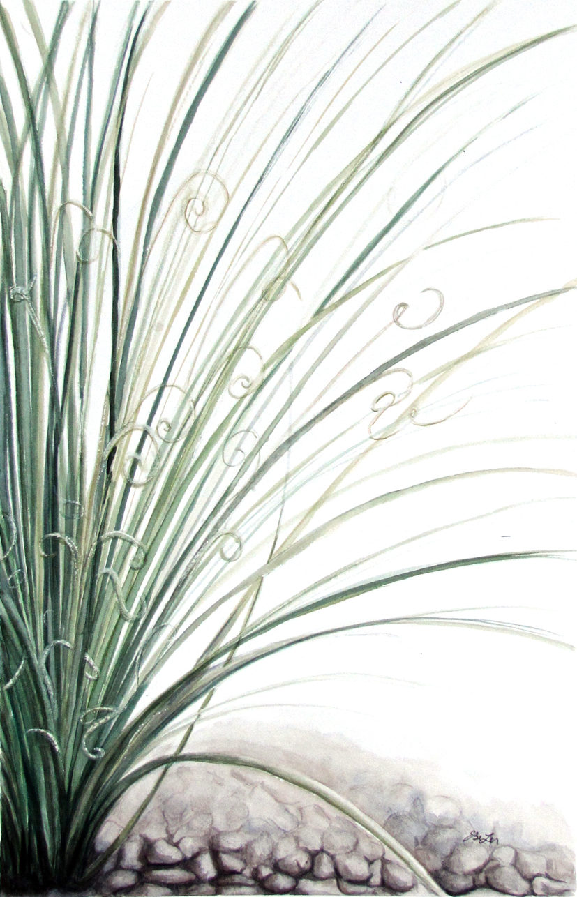 """Curls"" is a watercolor painting of an Arizona grass plant. Art by artist Esther BeLer Wodrich"