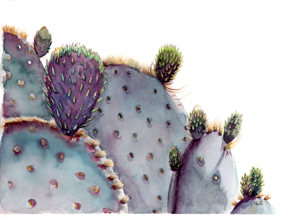 Prickly Pear is a watercolor painting of a prickly pear cactus plant. Art by artist Esther BeLer Wodrich