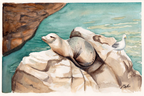 Seals at the Zoo is a watercolor painting of a seal and a seagull basking in the sun at the San Diego Zoo by artist Esther BeLer Wodrich