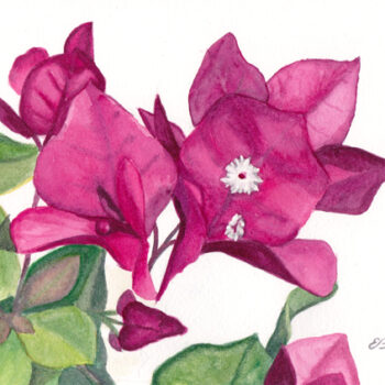 Bright pink bougainvillea watercolor painting on paper by artist Esther BeLer Wodrich
