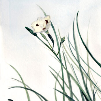 """Fortnight Lily"" is a botanical watercolor painting of the same named flowering plant by artist Esther BeLer Wodrich."