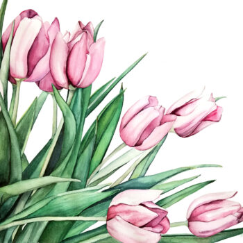 Pink Tulips is a botanical watercolor painting of soft and dark pink tulips by artist Esther BeLer Wodrich