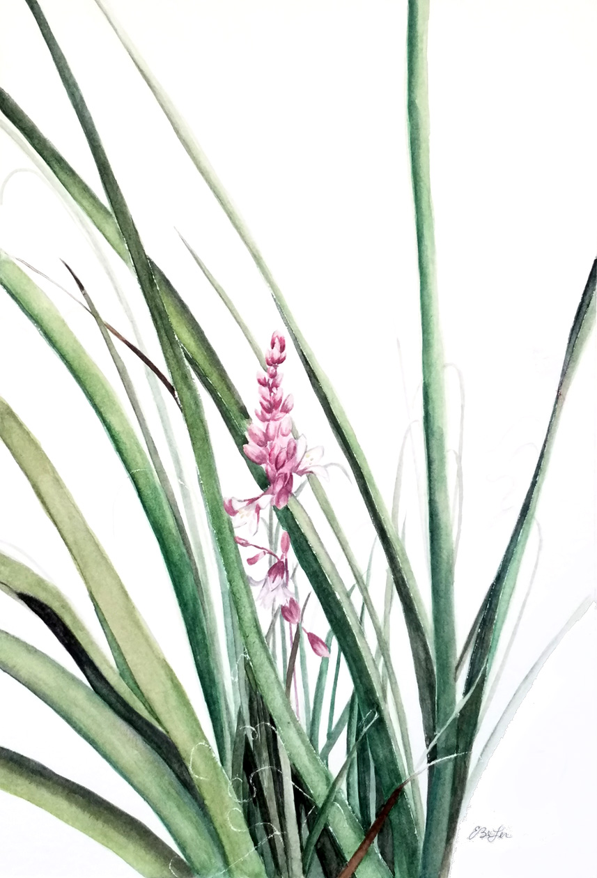 """Red Yucca"" is a botanical watercolor painting of a young Red Yucca plant by artist Esther BeLer Wodrich"