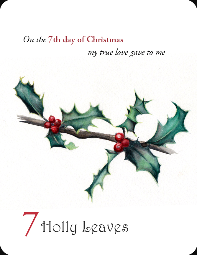 The 7th in a set of the 12 Days of Christmas, 7 Holly Leaves