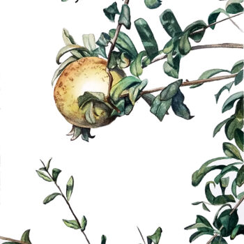 """Pomegranate"" is a realistic botanical watercolor painting of a pomegranate between the leaves by artist Esther BeLer Wodrich"