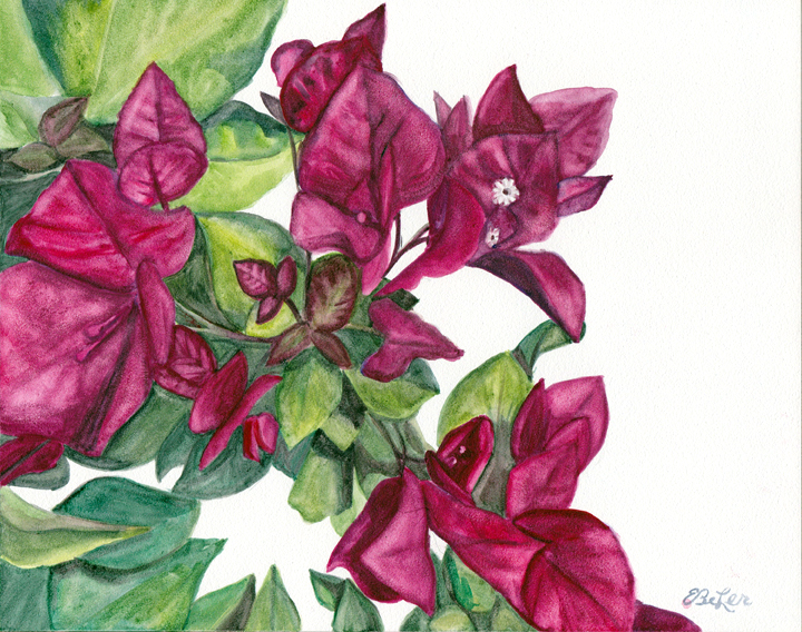Bright pink bougainvillea watercolor painting on aquabord by artist Esther BeLer Wodrich