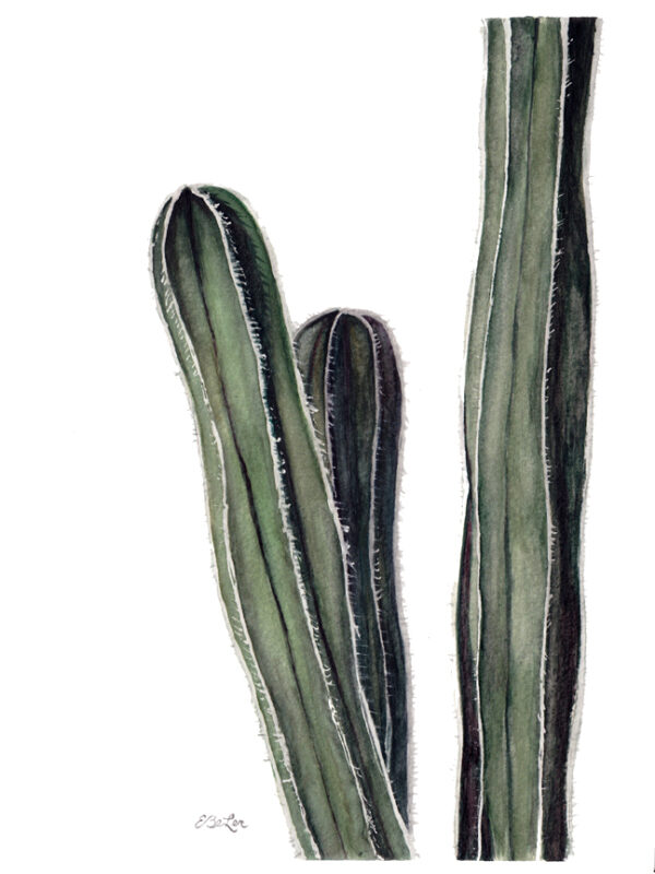 Mexican Fencepost is a watercolor painting of the same named cactus by artist Esther BeLer Wodrich