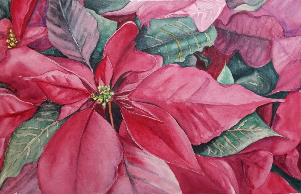 Poinsettia plant close-up painted in watercolor by artist Esther BeLer Wodrich