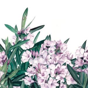 Botanical Originals