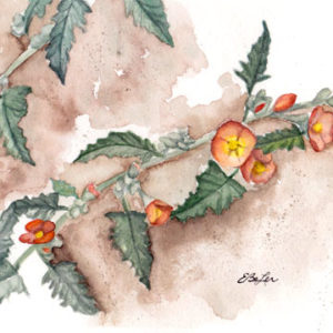 """""""Weeds"""" is a watercolor painting of a desert plant with orange buds by artist Esther BeLer Wodrich. Desert botanicals are for sale at www.estherbeler.com."""