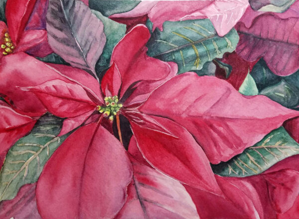"Watercolor poinsettia painting printed on premium 5""x7"" cardstock for a folded Christmas card"