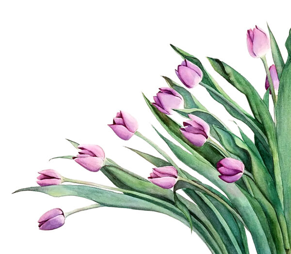 Purple Tulips is a botanical watercolor painting of purple tulips by artist Esther BeLer Wodrich