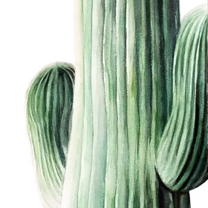 """""""Saguaro"""" is a botanical watercolor painting of a Saguaro cactus by artist Esther BeLer Wodrich"""