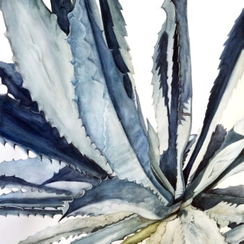 """Agave II"" is a botanical watercolor of an agave plant from up above by artist Esther BeLer Wodrich"