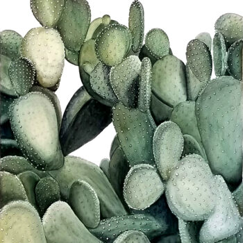 """Polka Dots"" is a watercolor botanical painting of a polka dot prickly pear cactus by artist Esther BeLer Wodrich"