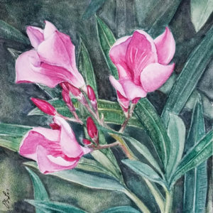"""""""Pretty in Pink"""" is a small botanical watercolor on Ampersand Aquabord of a hot pink oleander surrounded by green leaves by artist Esther BeLer Wodrich"""