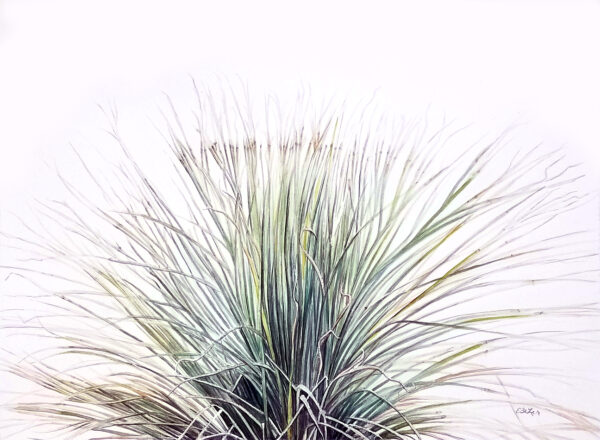 """Desert Grass"" is a watercolor of a grassy desert plant by artist Esther BeLer Wodrich"