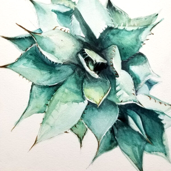 """Agave Babes"" is a small botanical watercolor painting of a young agave succulent plant on aquabord by artist Esther BeLer Wodrich"
