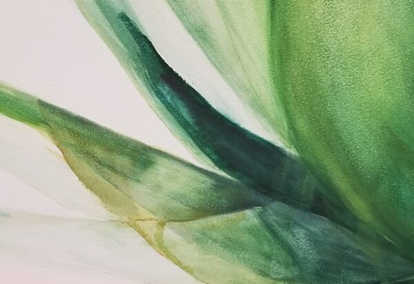 Sunburnt Agave watercolor close up image