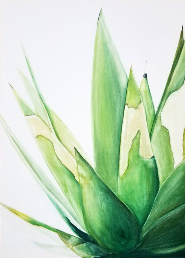 """Sunburnt Agave"" is a desert botanical watercolor painting of an agave cactus plant by artist Esther BeLer Wodrich"