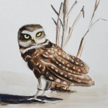 Day 19 2020 World Watercolor Month painting of desert owl by artist Esther BeLer Wodrich